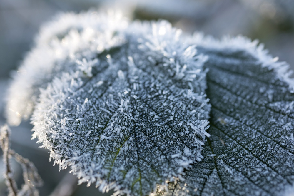 Close up of frost covered leaves.jpeg